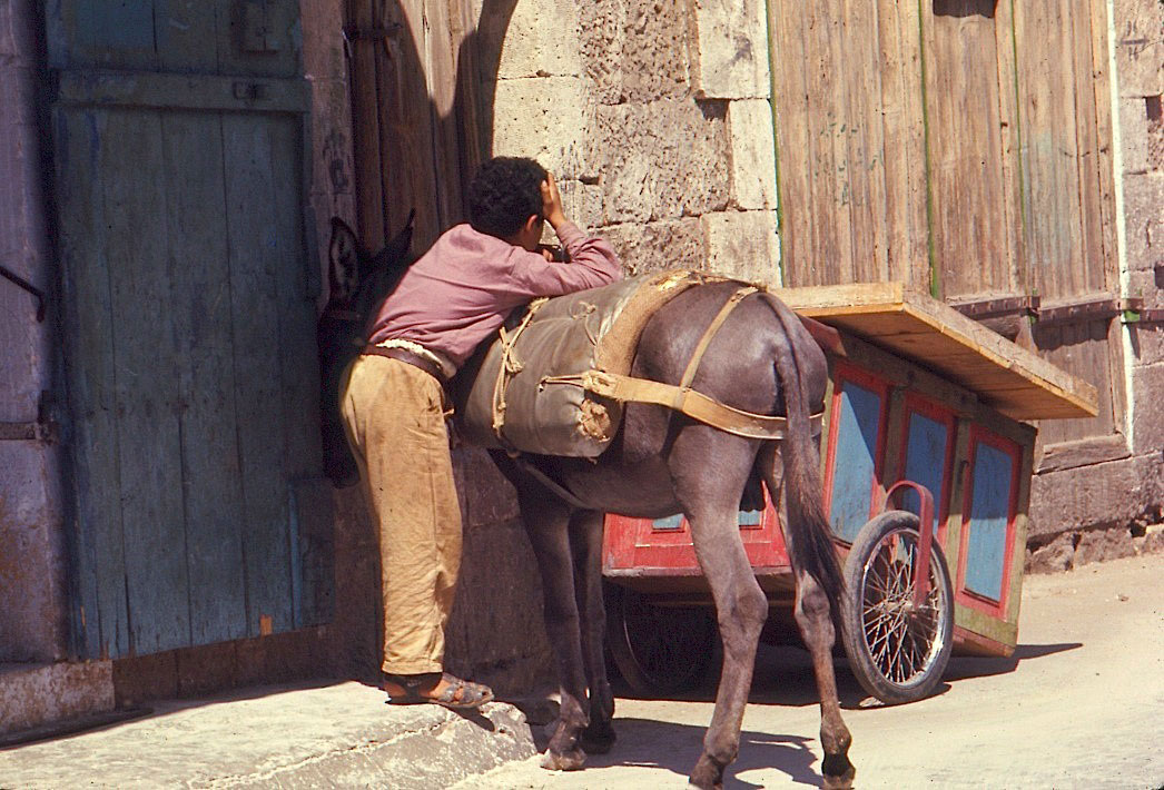 Boy-and-Donkey